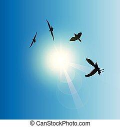 flying birds in sunny sky