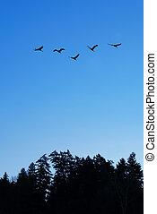 Flying birds over blue sky background