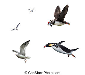 Flying birds: seagull, puffinn, penguin