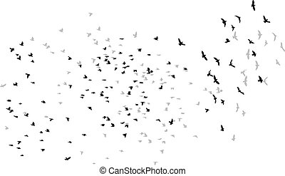 flying birds vector sketch