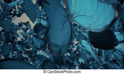 Flying Butterflies 4k