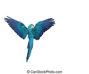 Flying colorful parrot isolated on white