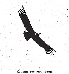 Flying condor silhouette on the white background.