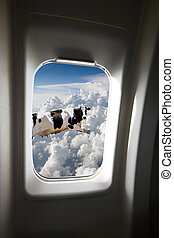 A flying cow viewd out a plane window