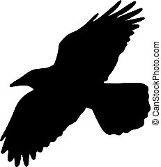 Flying crow isolated on white