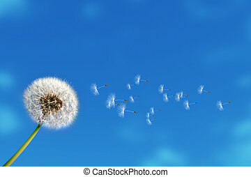 flying dandelion seeds on blue sky