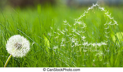 Flying dandelions seed form house