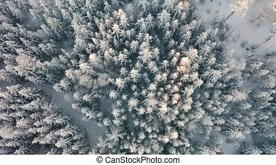 Flying directly above large cold forest in epic morning...