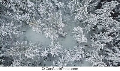 Flying directly above large forest in the cold winter -...