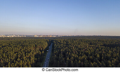 Flying drone over the track in a pine forest during sunset, clear blue sky against the background of the city