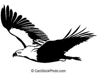Flying Eagle - Black and White Flying Eagle - Outline...