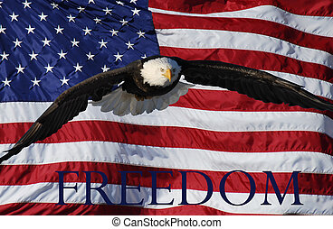 Flying eagle with flag freedom