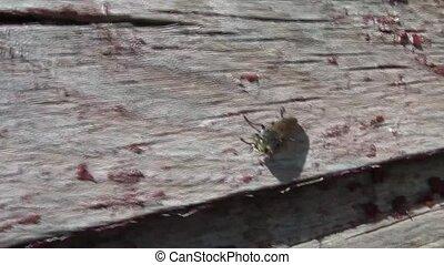 Flying Farm Bug Closeup - Closeup of flying bug on old...