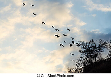 flying flock of birds against the blue sky and clouds