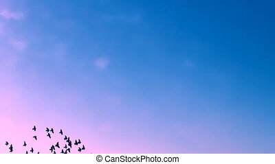 FLYING FLOCK OF BIRDS IN THE SKY