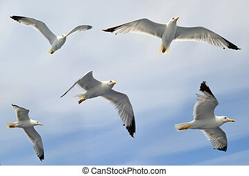 Flying flock of seagull.