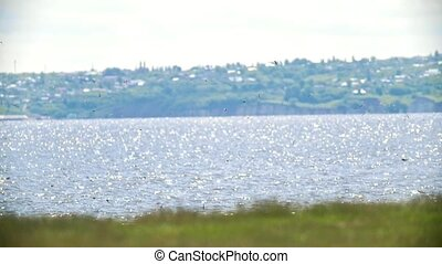 Flying flock of swallows over the river on the hill in sunny...