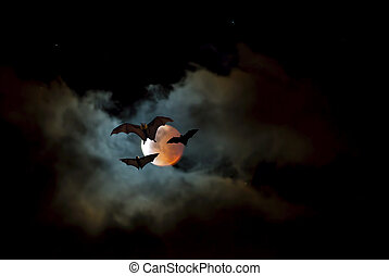 Flying Fox or fruit bat over dark sky