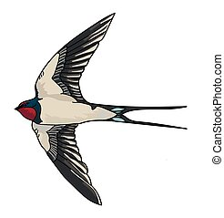Flying gray swallow with forked tail and long pointed black wings on a white background.