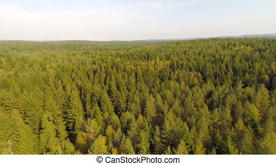 Flying high above spruce forest - Camera flying over a large...