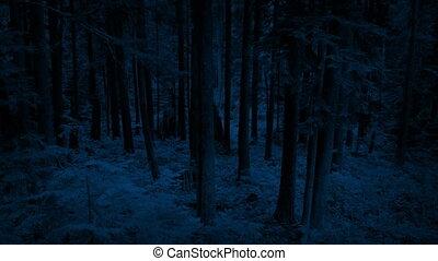 Flying High Up Past Woodland At Night - Rising shot of...