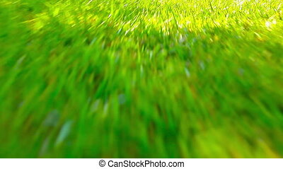 flying in the green grass