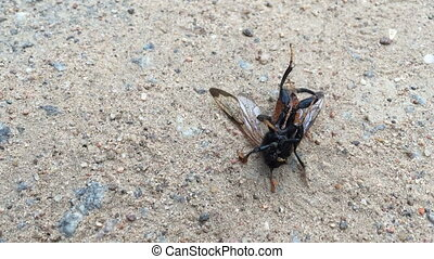 flying insect dies on the ground