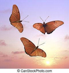 3 butterflies at sunset