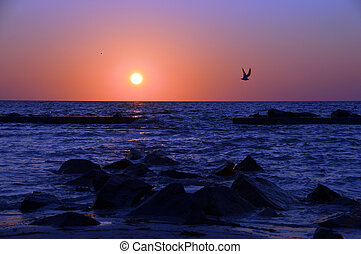 Flying into the sunset - A bird in the foreground flys home...
