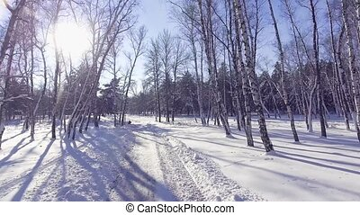 Flying into the wood between the trees strains in winter