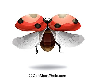 flying ladybug on white background. vector illustration