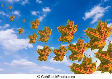flying leaves in autumn