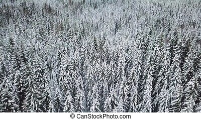 Flying low over large forest in the cold winter - Camera...