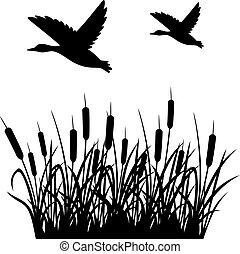 Flying mallard duck and reeds vector illustration