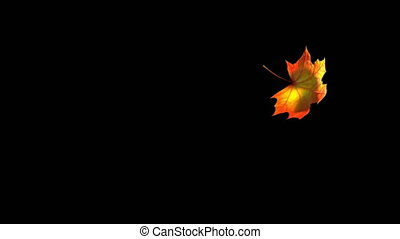 Flying Maple Leaf On Black Background With Alpha Channel. Seamless Looped. 3D Animation. 4K. 3840x2160.