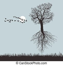 Flying Mulberry tree