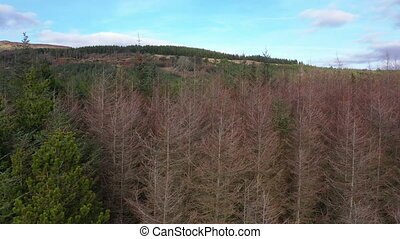 Flying next to forest close to the town Glenties in County Donegal - Ireland.