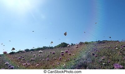 Flying orange butterflies over beautiful lilac flowers on warm sunny spring day in slow motion. Coming shot of nature and butterflies flying over grass and flowers in the field. Beautiful insect.