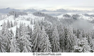 Flying over a beautiful winter forest in the highlands