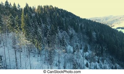 flying over a winter forest in the mountains