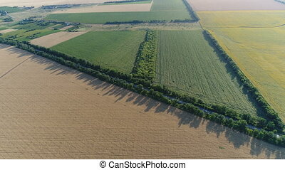 Flying over agricultural fields. Aerial video shooting