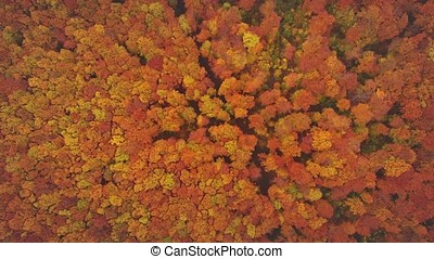 Flying over beautiful autumn trees