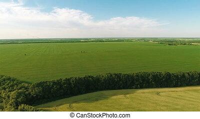Flying Over Big Green Field - Aerial shot: Flying Over Big...