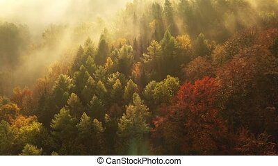 Flying over fabulous autumn forest with fog in the early morning, aerial view. Silence, calmness and relaxation concept.