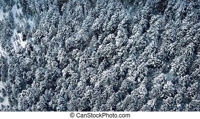 Flying Over Forest With Snowfall