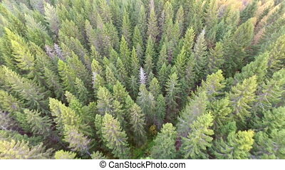 Flying over green forest - Camera flying above a large...