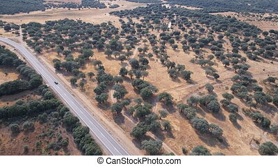 Flying over holm oak trees and road with car - Aerial view...