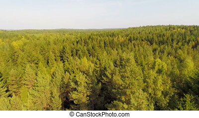Flying over large forest in daylight - Camera flying over a...