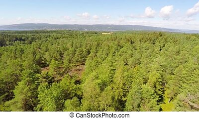 Flying over large pine forest - Camera flying forward over a...