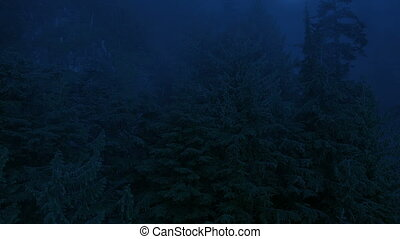 Flying Over Misty Forest With Moon Above - Aerial view of...